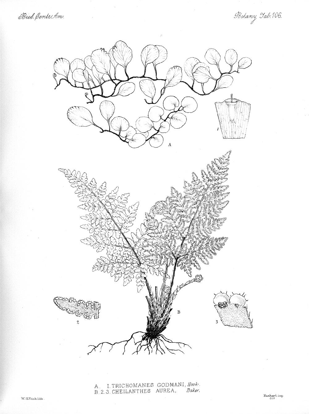 Plants,  Image number:bca_21_05_00_227
