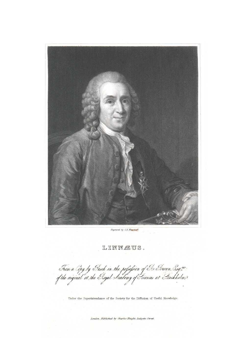 Portrait of Carl von Linné,  Image number:SIL14-L004-13a