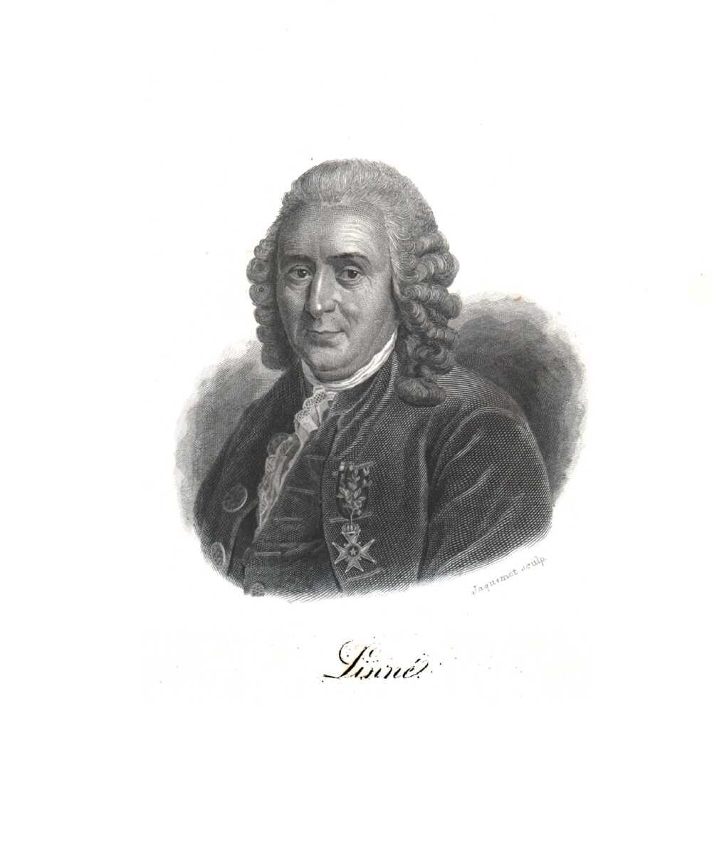 Portrait of Carl von Linné,  Image number:SIL14-L004-16a