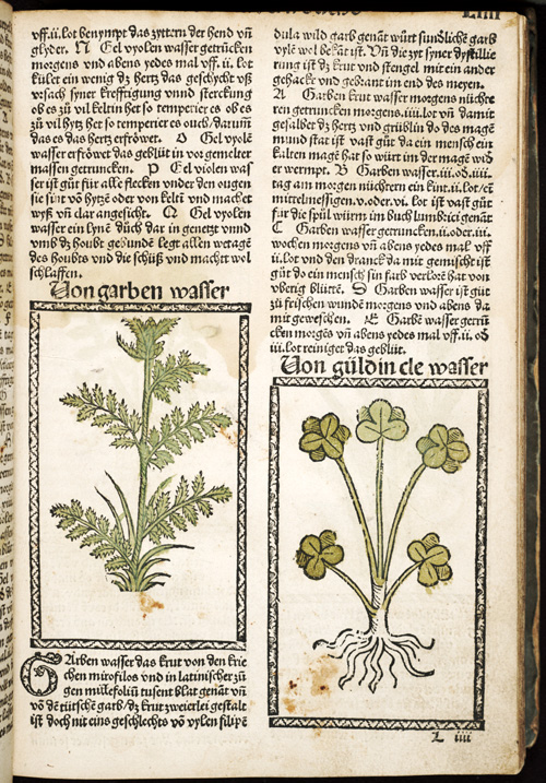 L4r - colored engravings of plants,  Image number:sil28-067-09