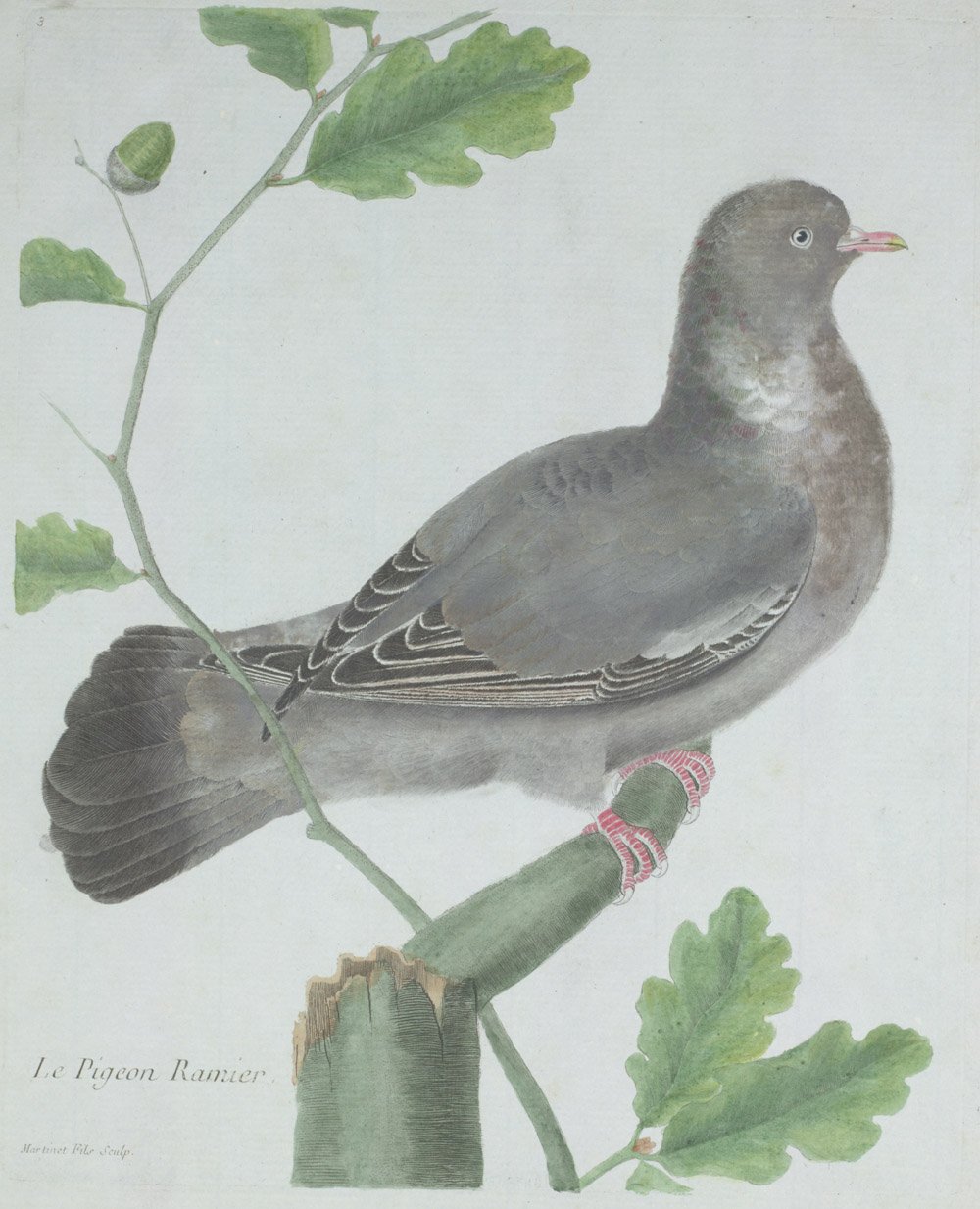 Plate 3: Le Pigeon Ramier,  Image number:SIL13-1-11b
