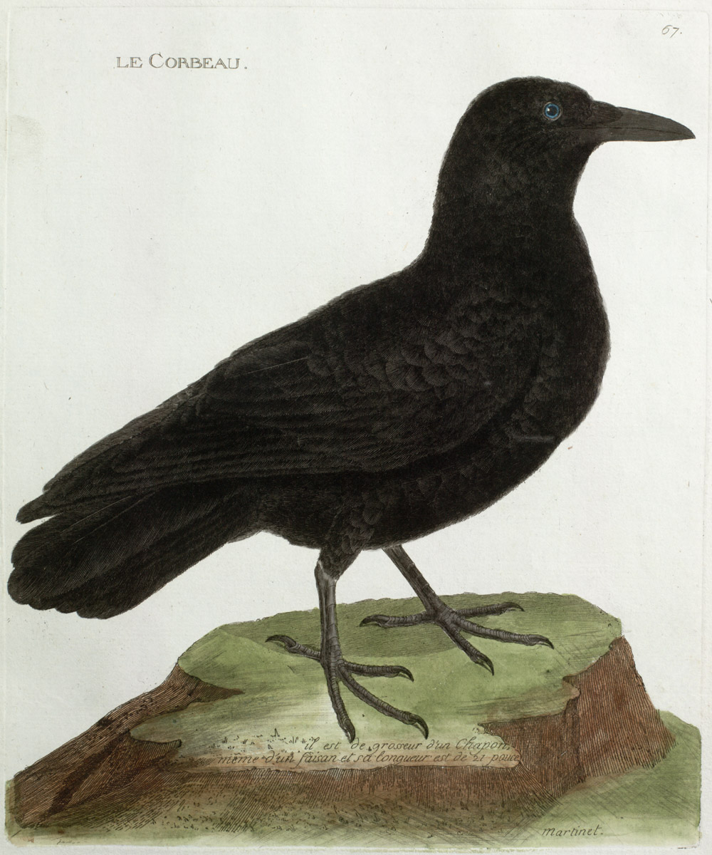 Plate 67: Le Corbeau,  Image number:SIL13-1-139b