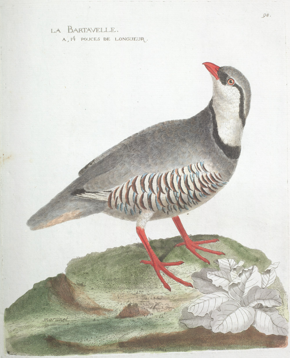 Plate 98: La Bartavelle,  Image number:SIL13-1-201b