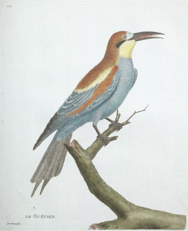 Plate 107: Le Guêpier,  Image number:SIL13-1-219b