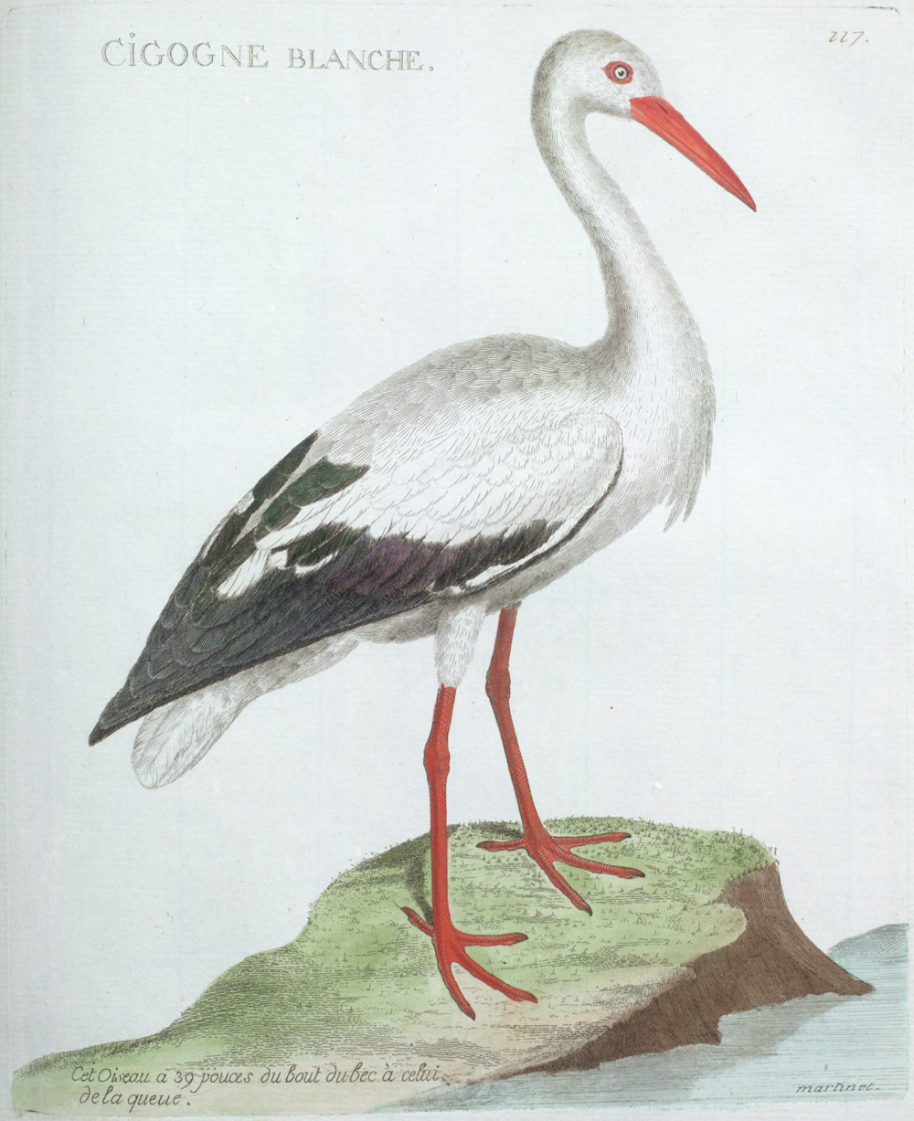 Plate 117: Cigogne Blanche,  Image number:SIL13-1-239b