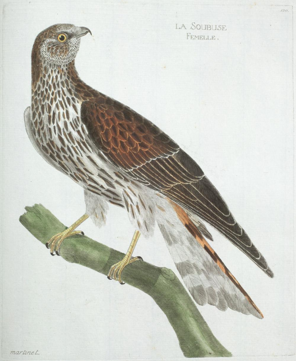Plate 130: La Soulouse Femelle,  Image number:SIL13-1-265b