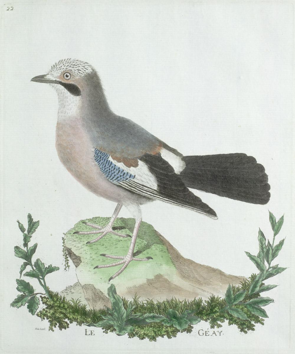 Plate 22: Le Géay,  Image number:SIL13-1-49b