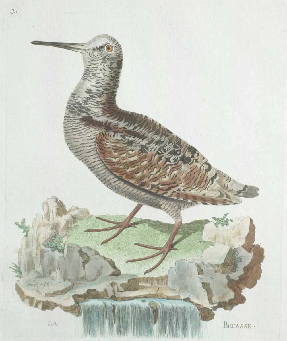 Plate 30: La Becasse,  Image number:SIL13-1-65b