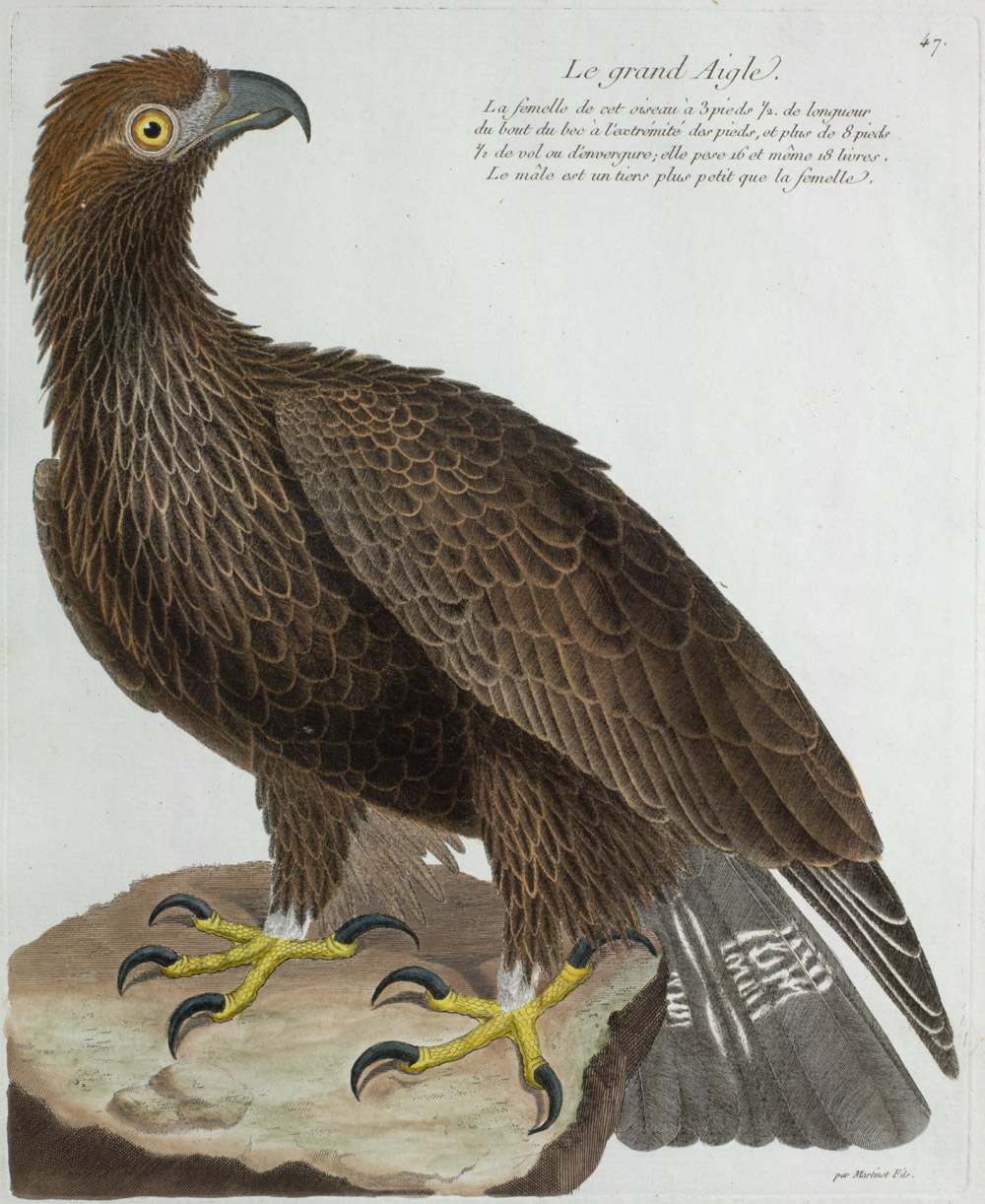 Plate 47: Le Grand Aigle,  Image number:SIL13-1-99b