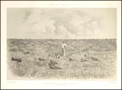 Palmer on Laysan surrounded by frigate birds