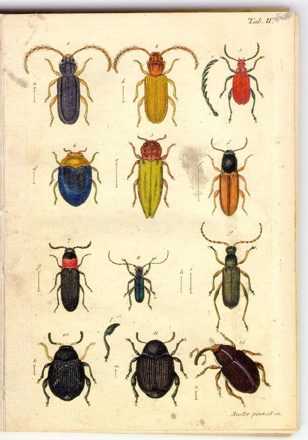 Illustrations of beetles,  Image number:sturm-tab-ii