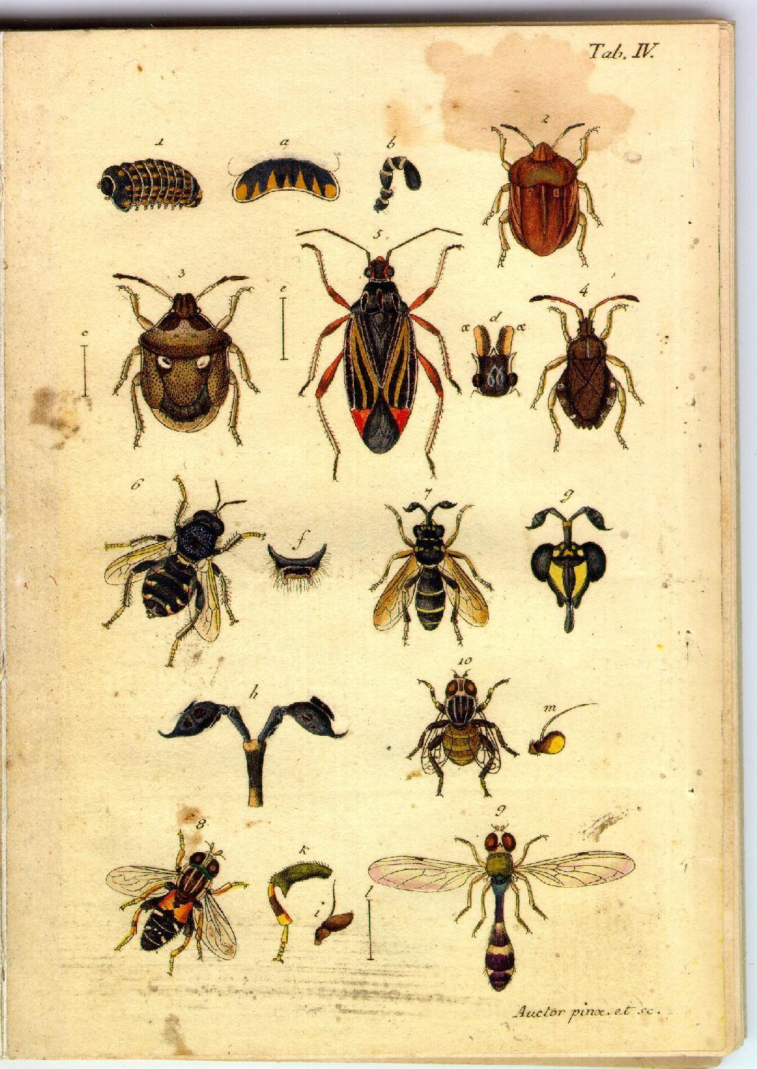 Illustrations of beetles and bees,  Image number:sturm-tab-iv