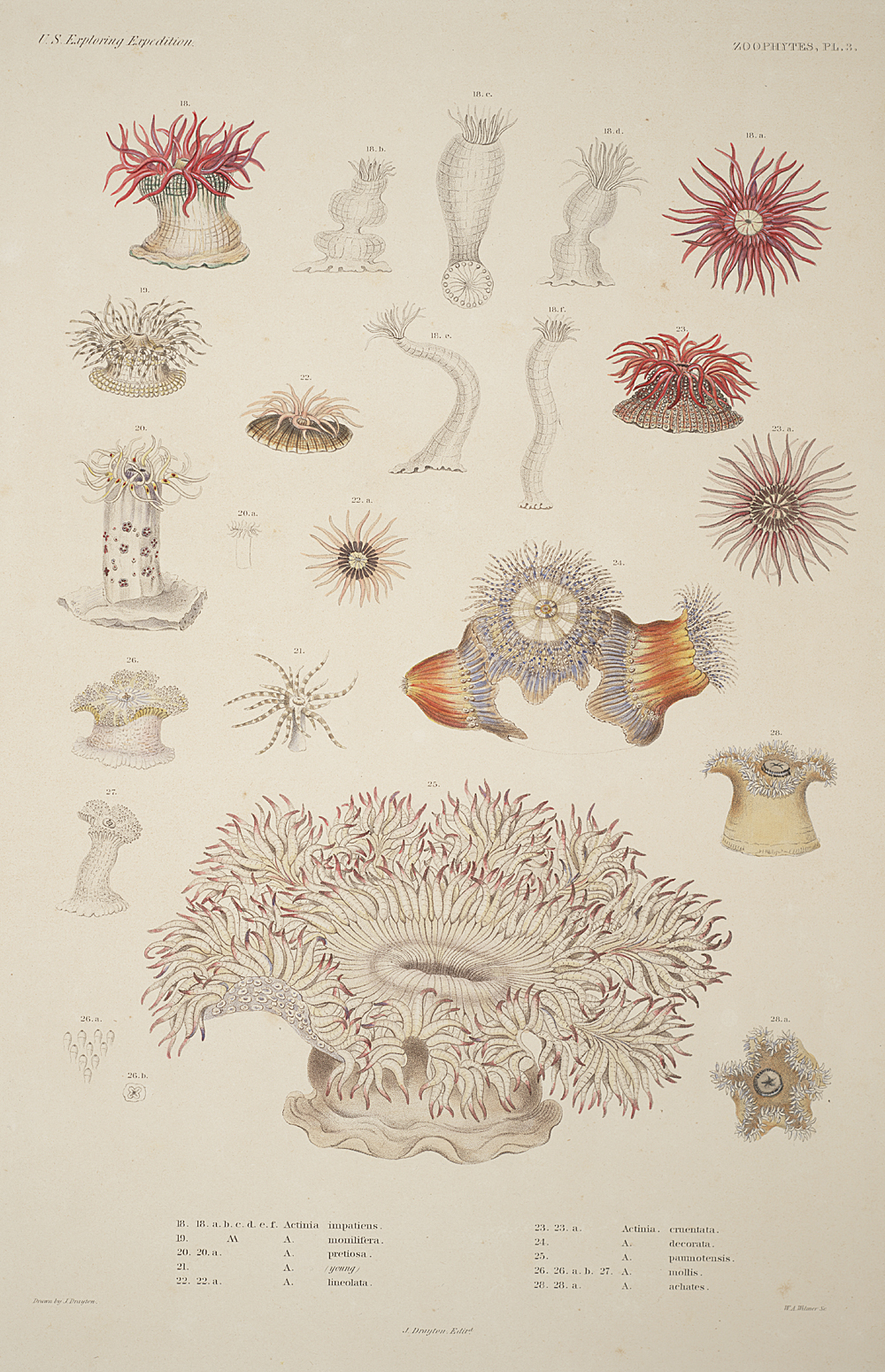 Zoophytes, Plate 3,  Image number:sil19-09-023b