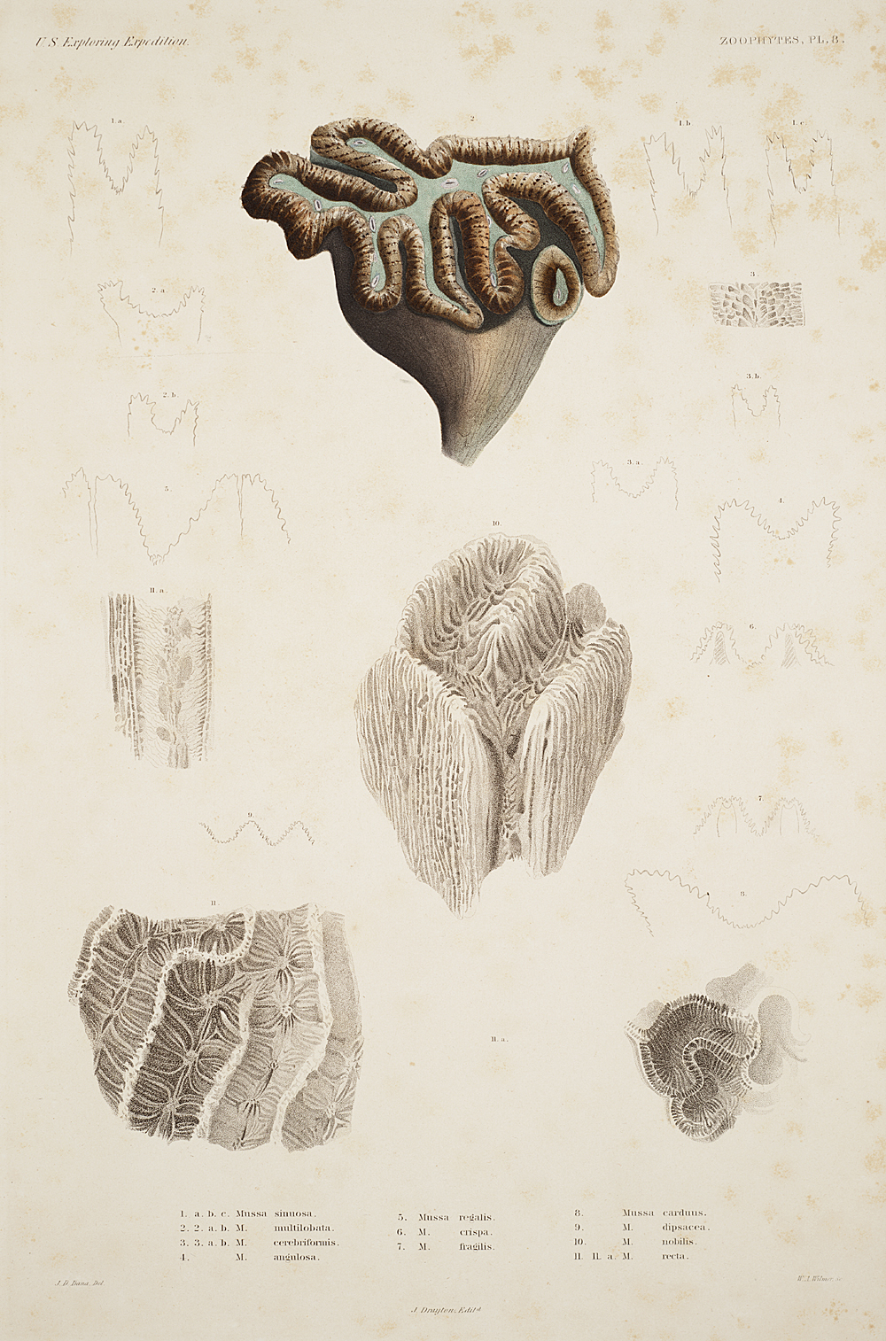 Zoophytes, Plate 8,  Image number:sil19-09-033b