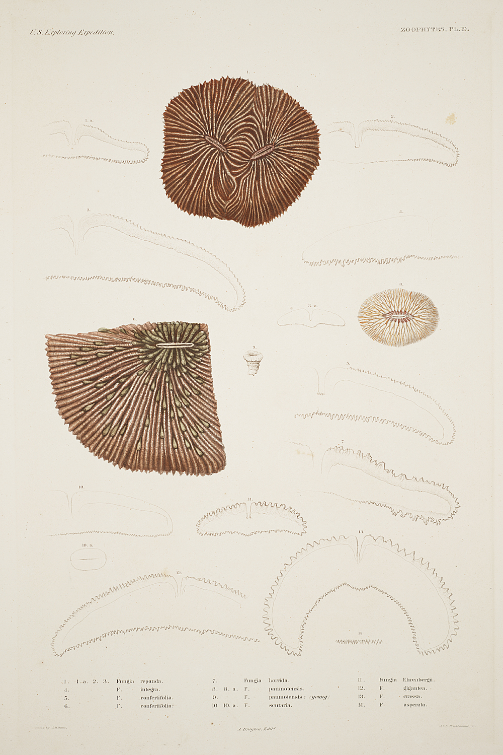 Zoophytes, Plate 19,  Image number:sil19-09-055b