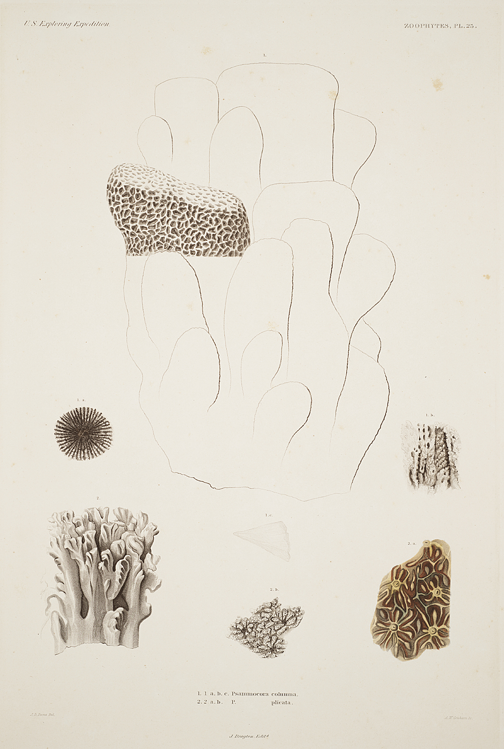 Zoophytes, Plate 25,  Image number:sil19-09-067b