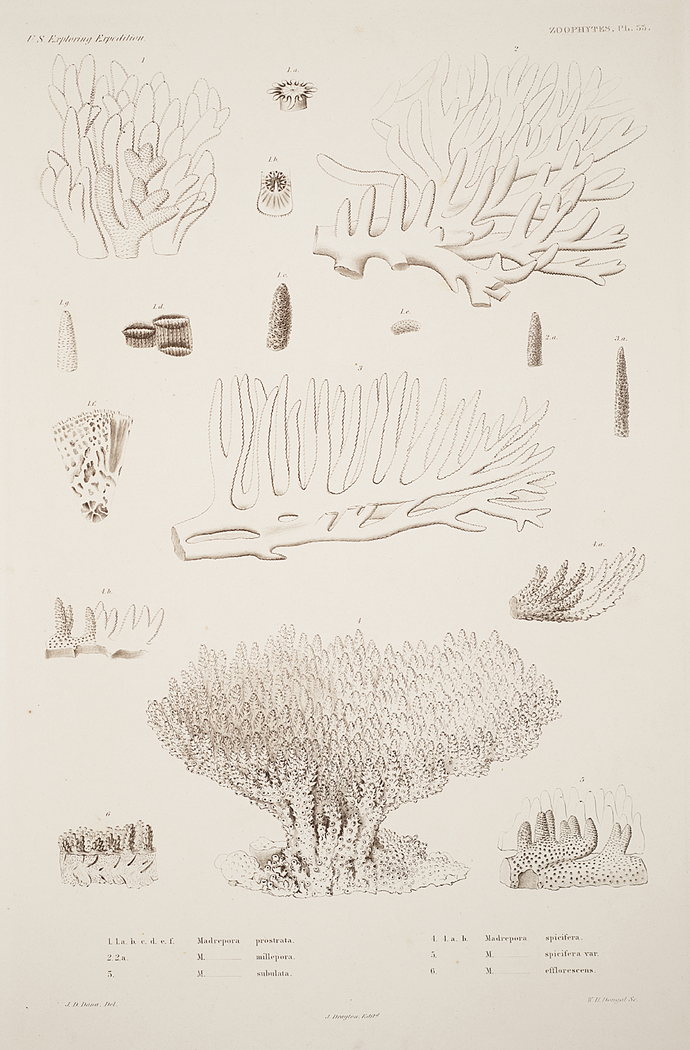 Zoophytes, Plate 33,  Image number:sil19-09-083b