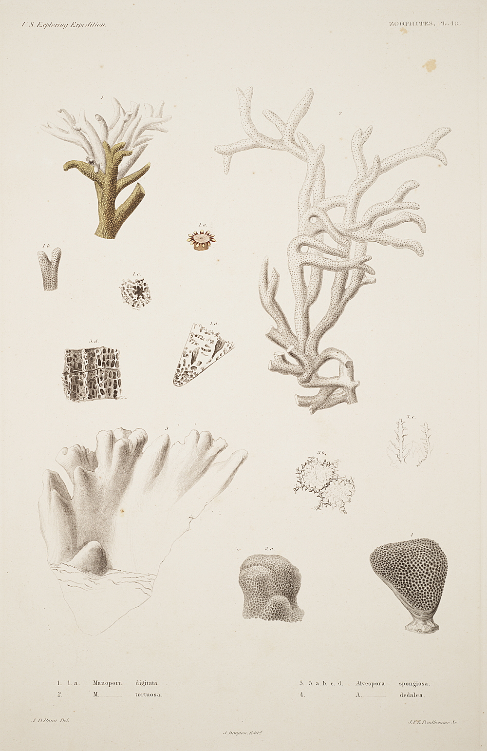 Zoophytes, Plate 48,  Image number:sil19-09-113b