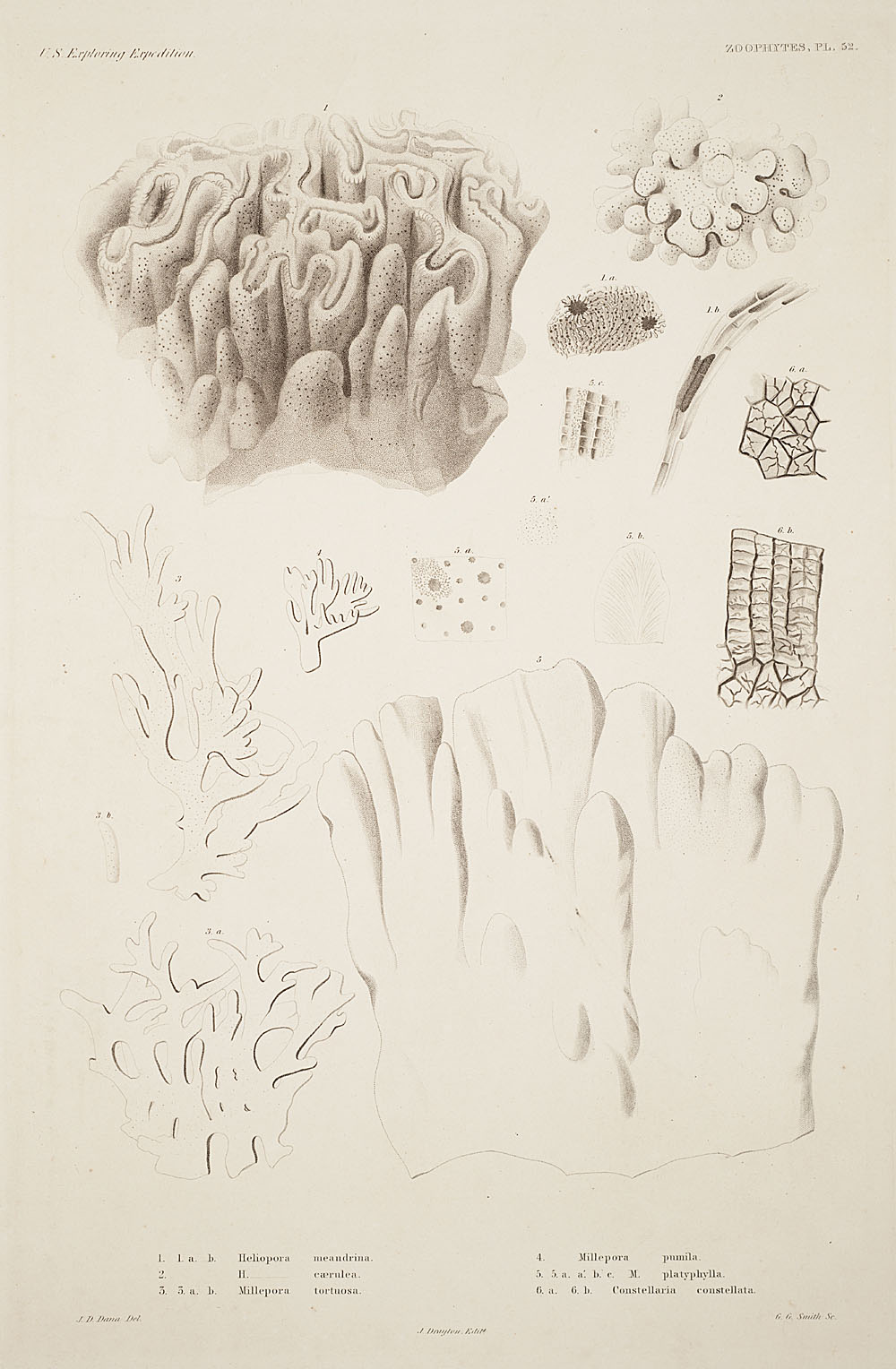 Zoophytes, Plate 52,  Image number:sil19-09-121b
