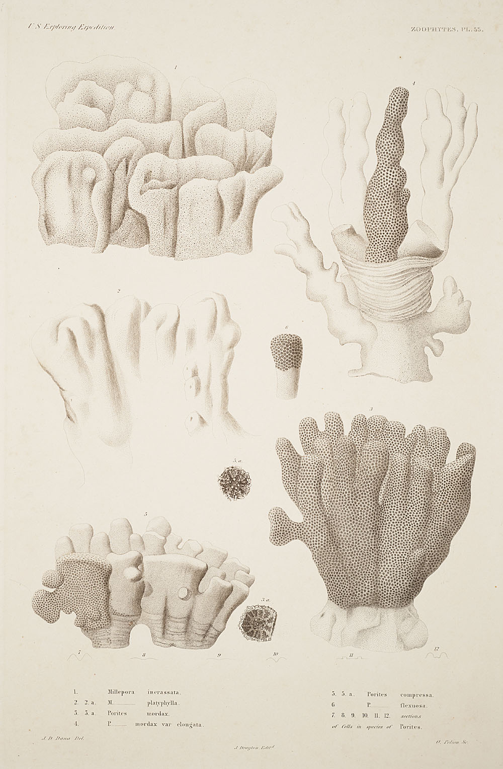 Zoophytes, Plate 53,  Image number:sil19-09-123b