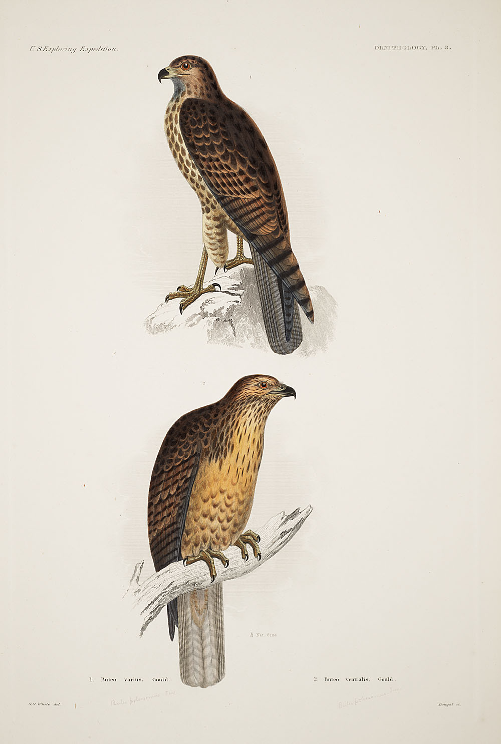 Ornithology, Pl. 3,  Image number:sil19-12-037b