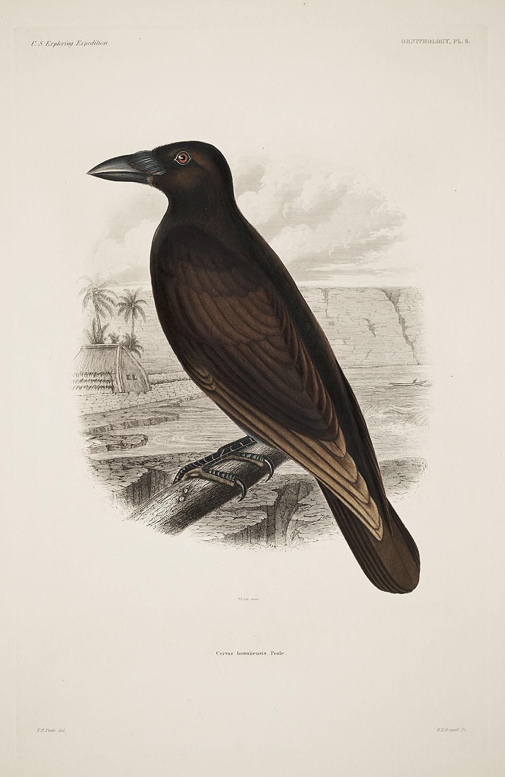 Ornithology, Pl. 6,  Image number:sil19-12-043b
