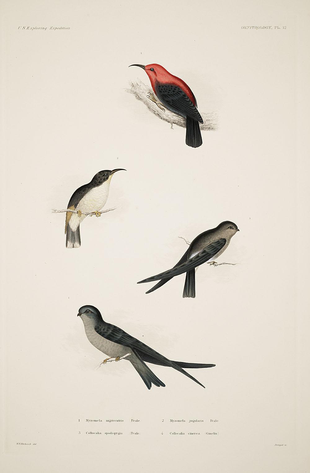 Ornithology, Pl. 12,  Image number:sil19-12-055b