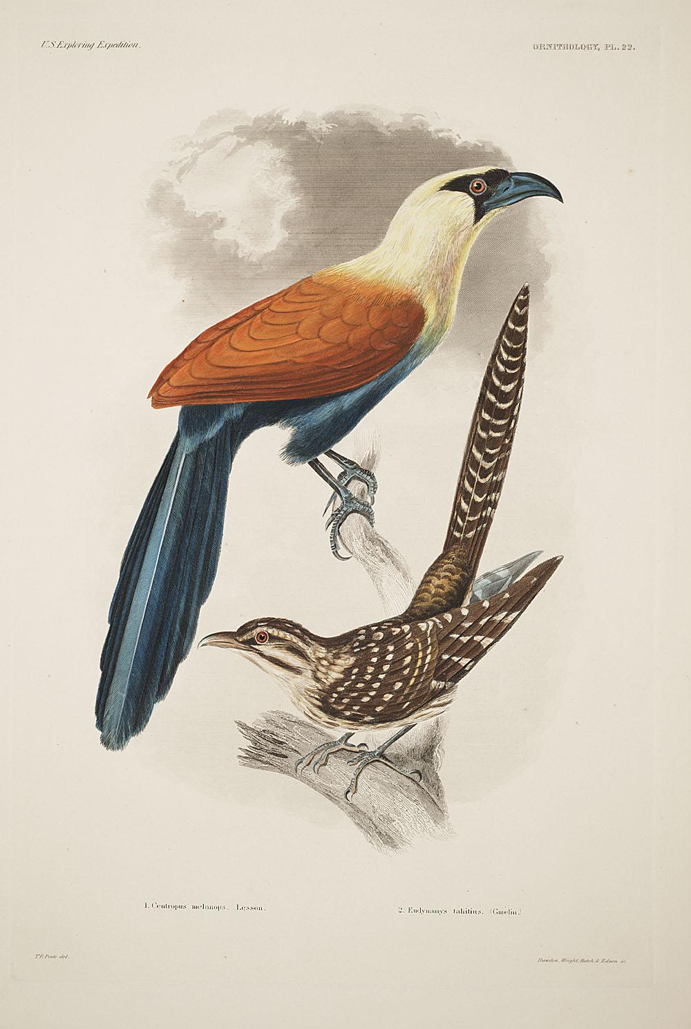 Ornithology, Pl. 22,  Image number:sil19-12-075b