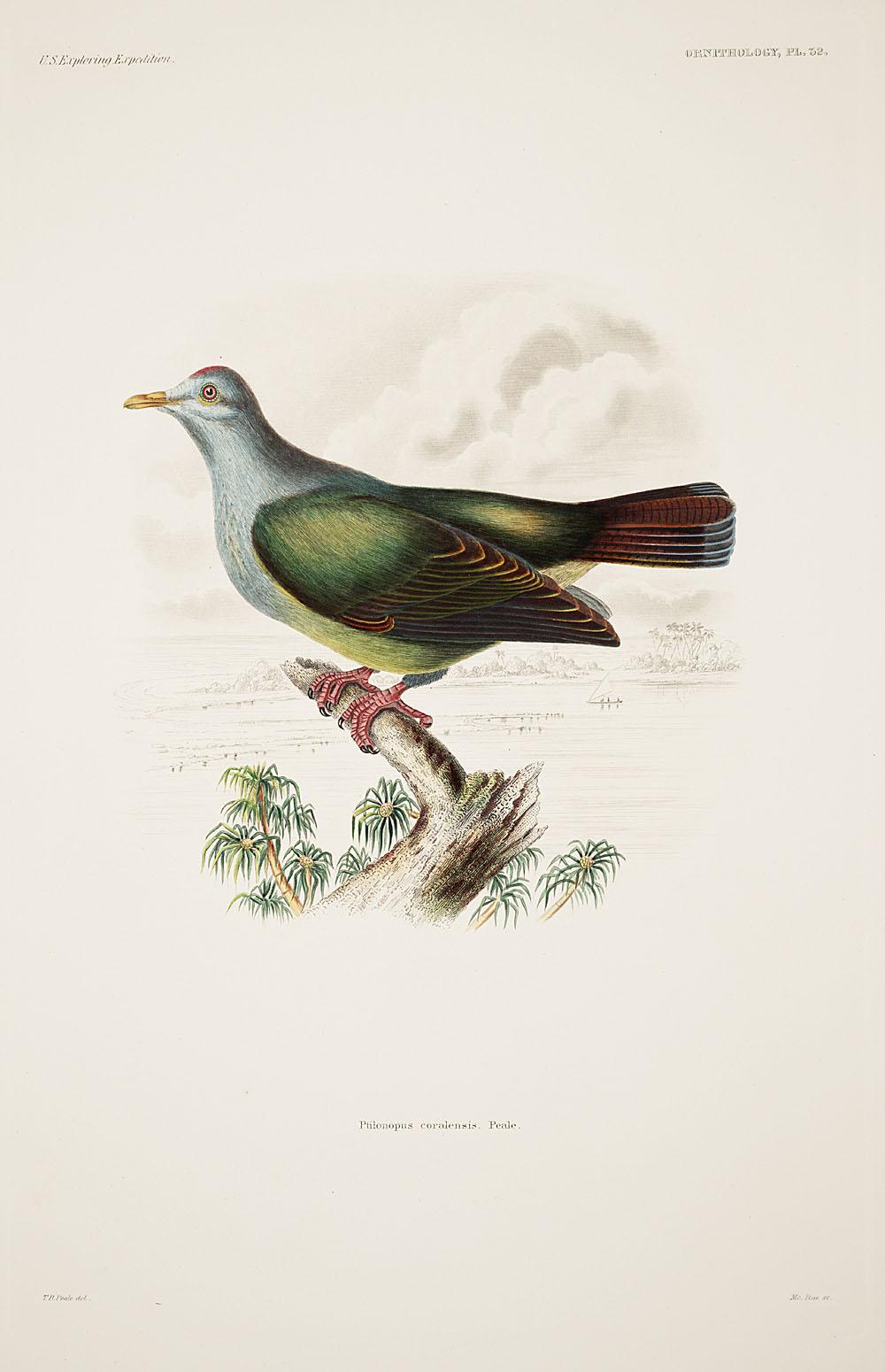 Ornithology, Pl. 32,  Image number:sil19-12-095b