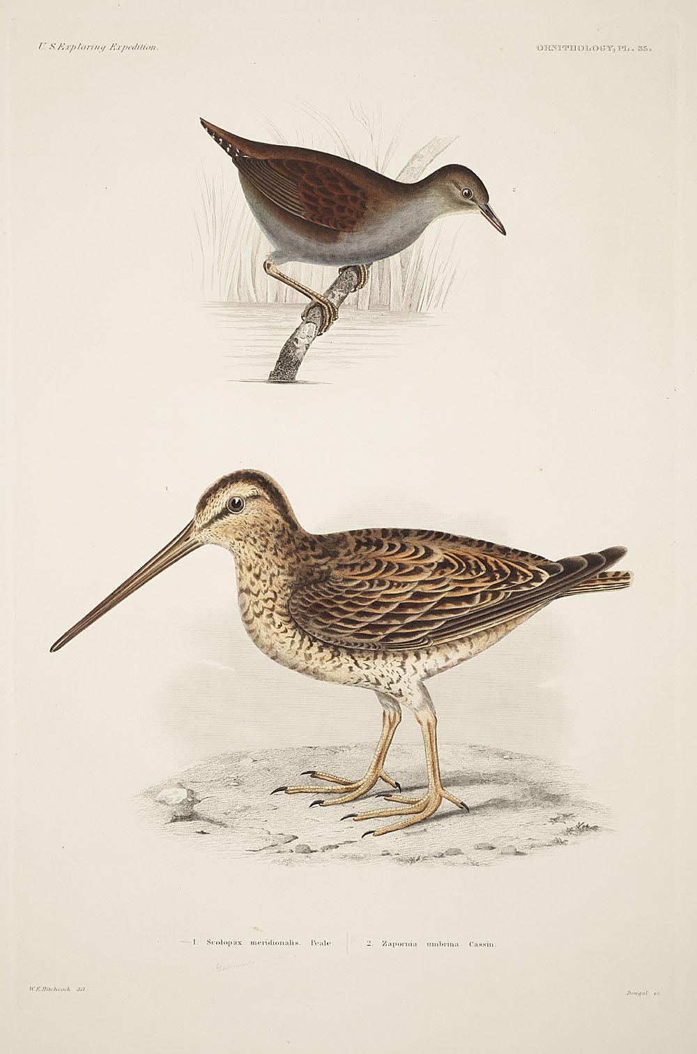 Ornithology, Pl. 35,  Image number:sil19-12-101b
