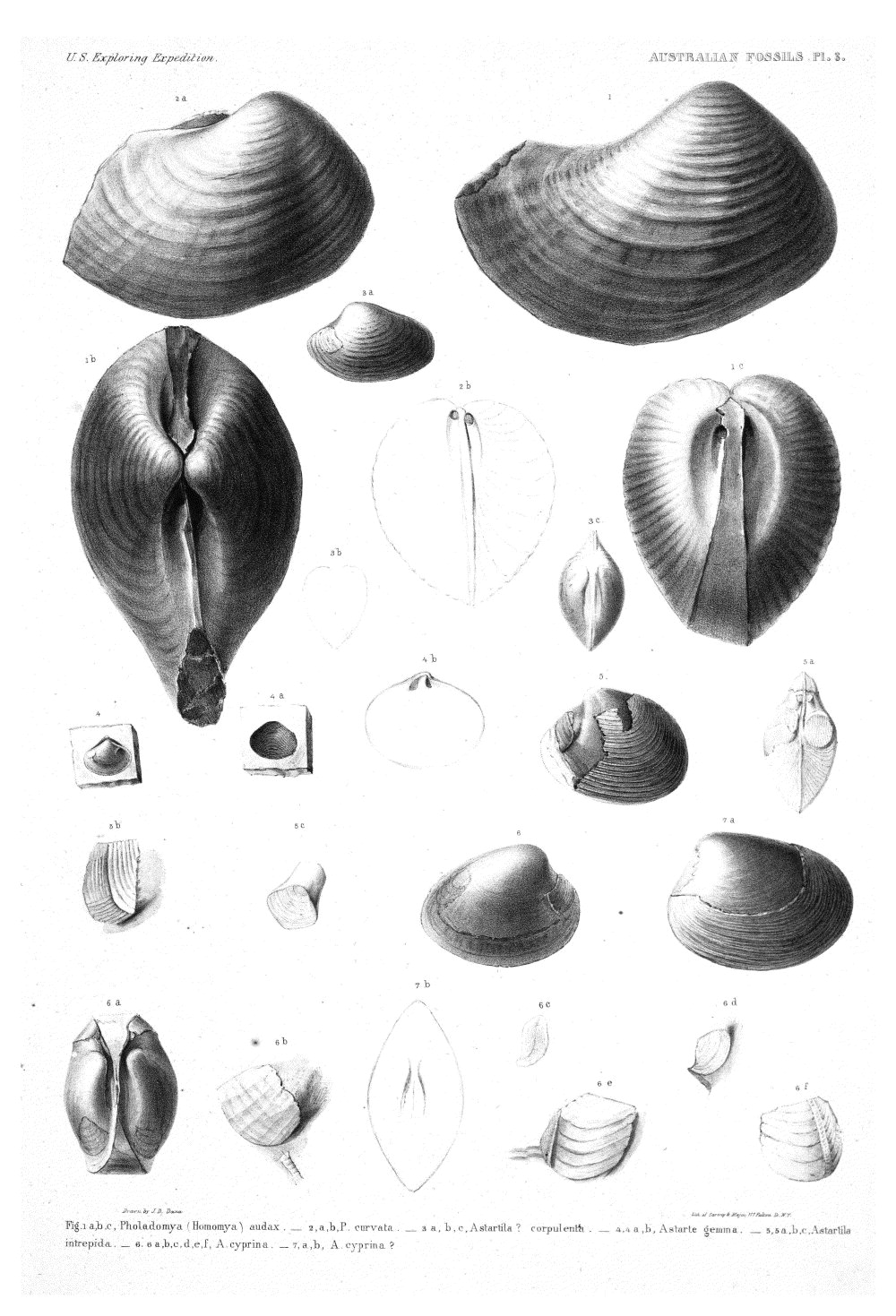 Australian Fossils, Plate 3,  Image number:Sil19-15-009