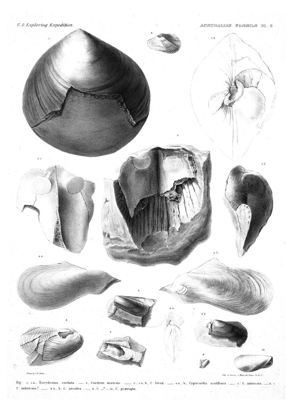 Australian Fossils, Plate 8,  Image number:Sil19-15-014