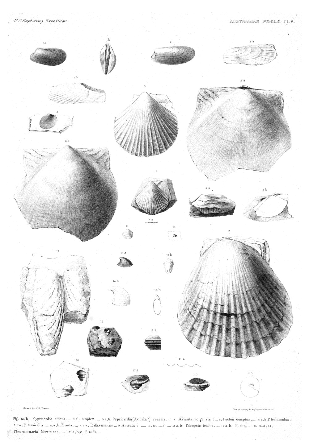 Australian Fossils, Plate 9,  Image number:Sil19-15-015