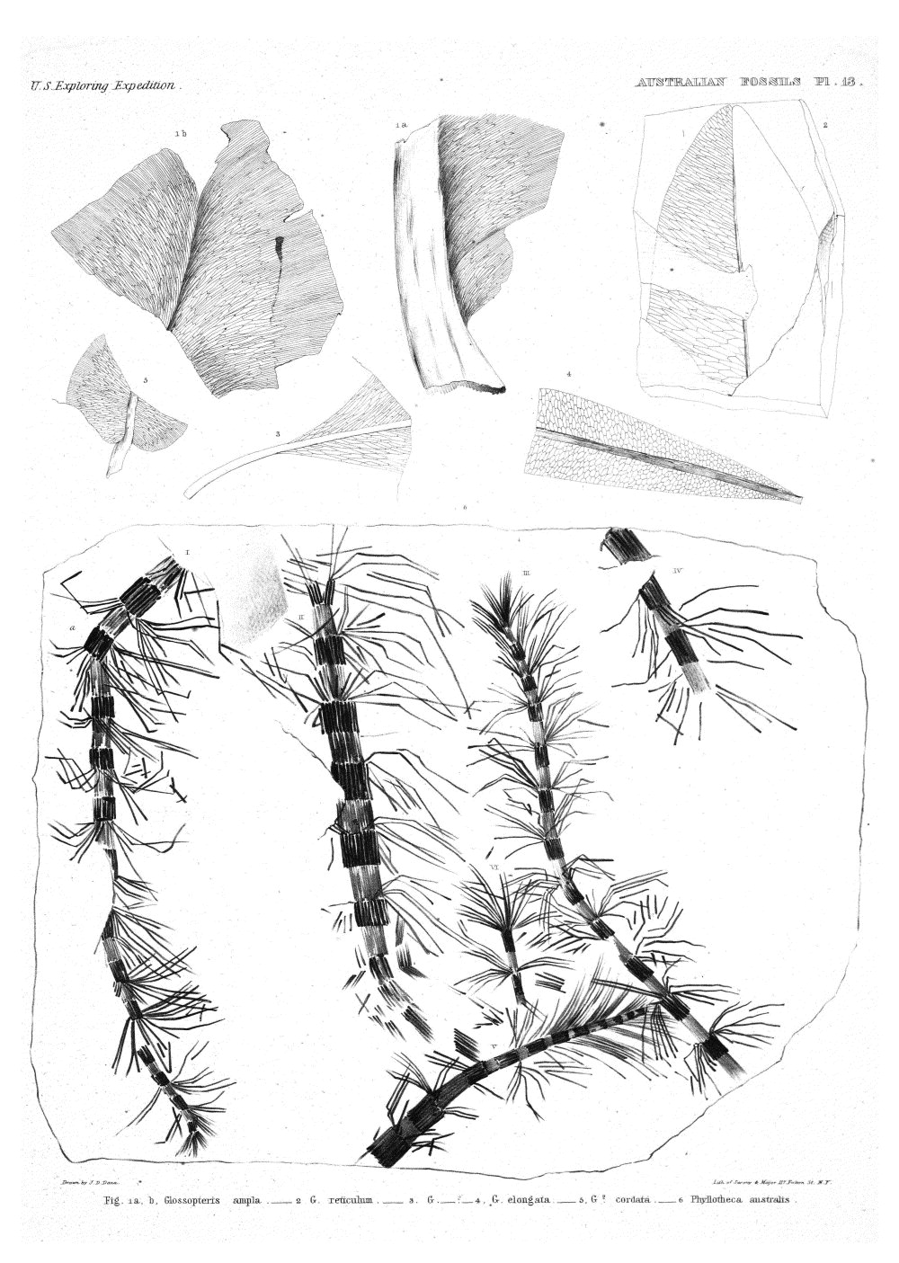 Australian Fossils, Plate 13,  Image number:Sil19-15-019
