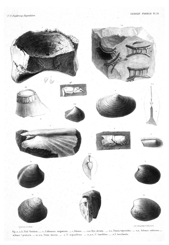 Oregon Fossils, Plate 17,  Image number:Sil19-15-023