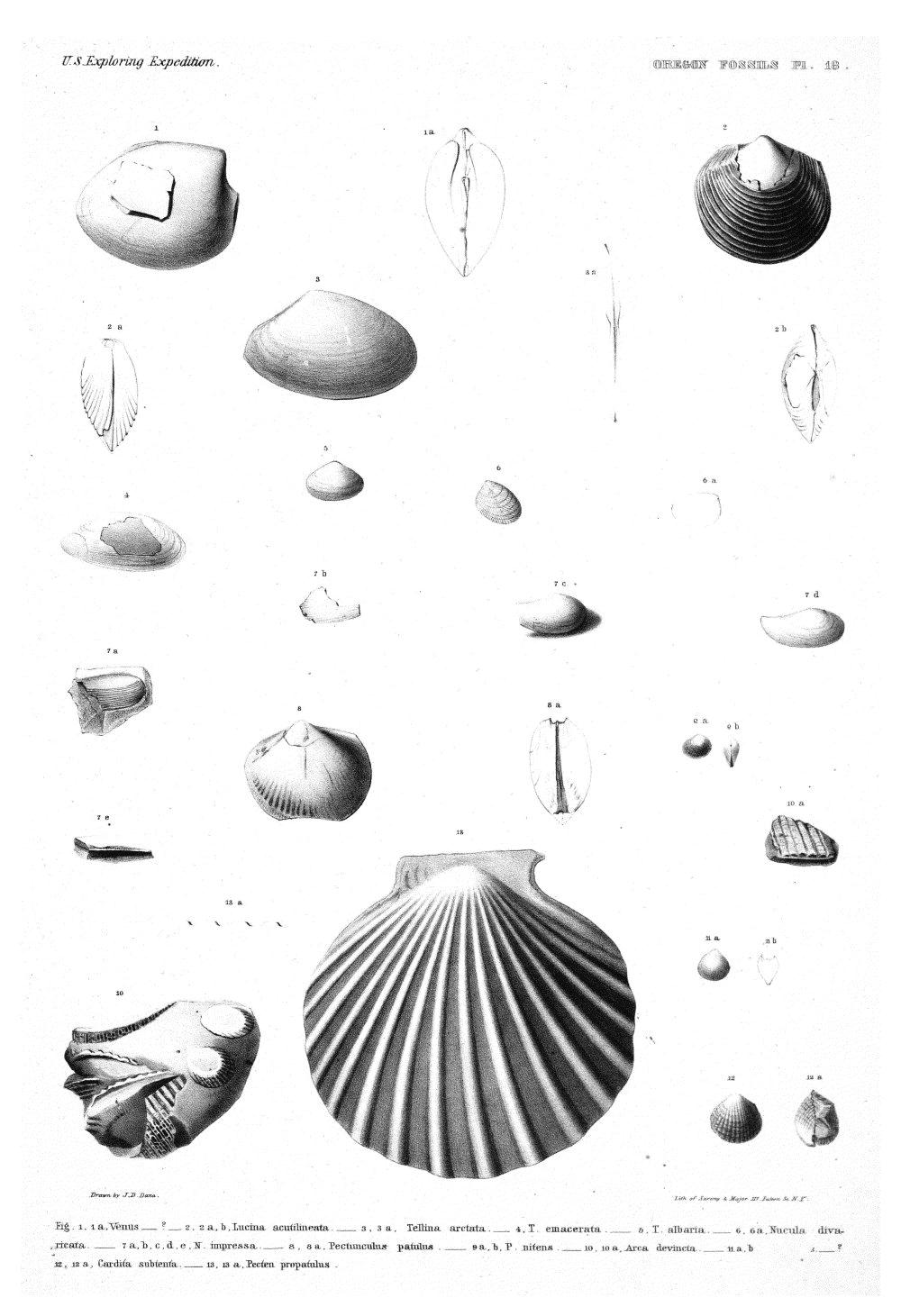 Oregon Fossils, Plate 18,  Image number:Sil19-15-024