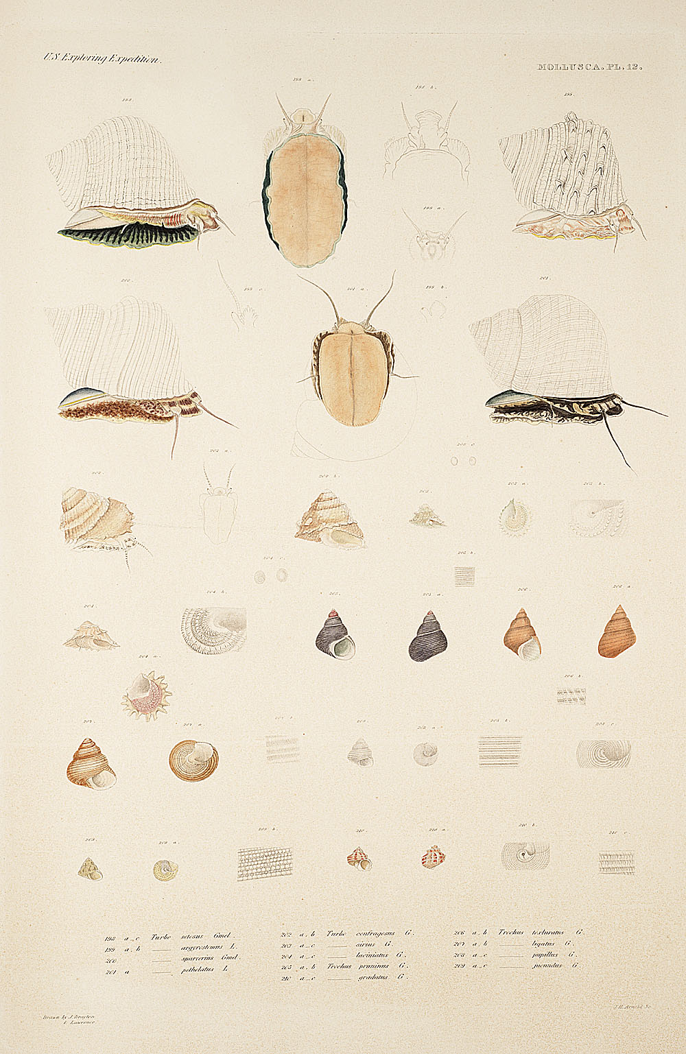 Mollusca, Pl. 12,  Image number:sil19-18-045b