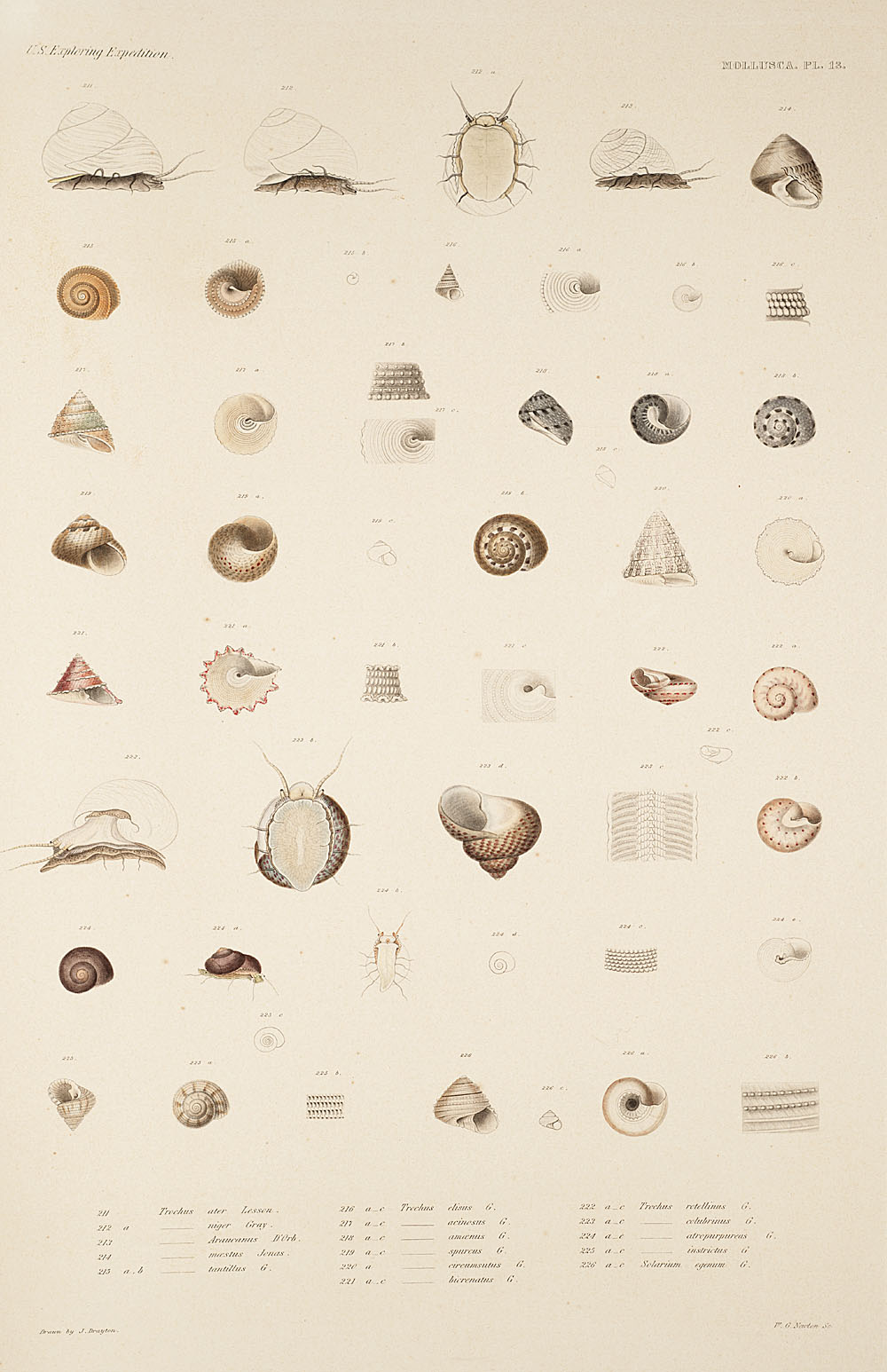 Mollusca, Pl. 13,  Image number:sil19-18-047b