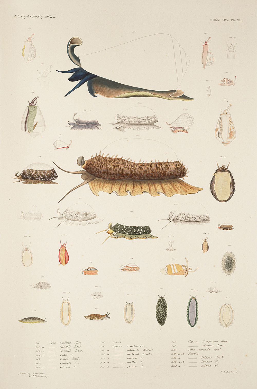 Mollusca, Pl. 21,  Image number:sil19-18-063b