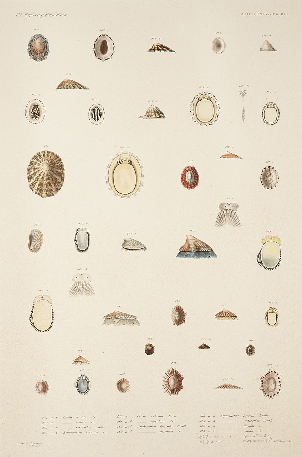 Mollusca, Pl. 30,  Image number:sil19-18-081b