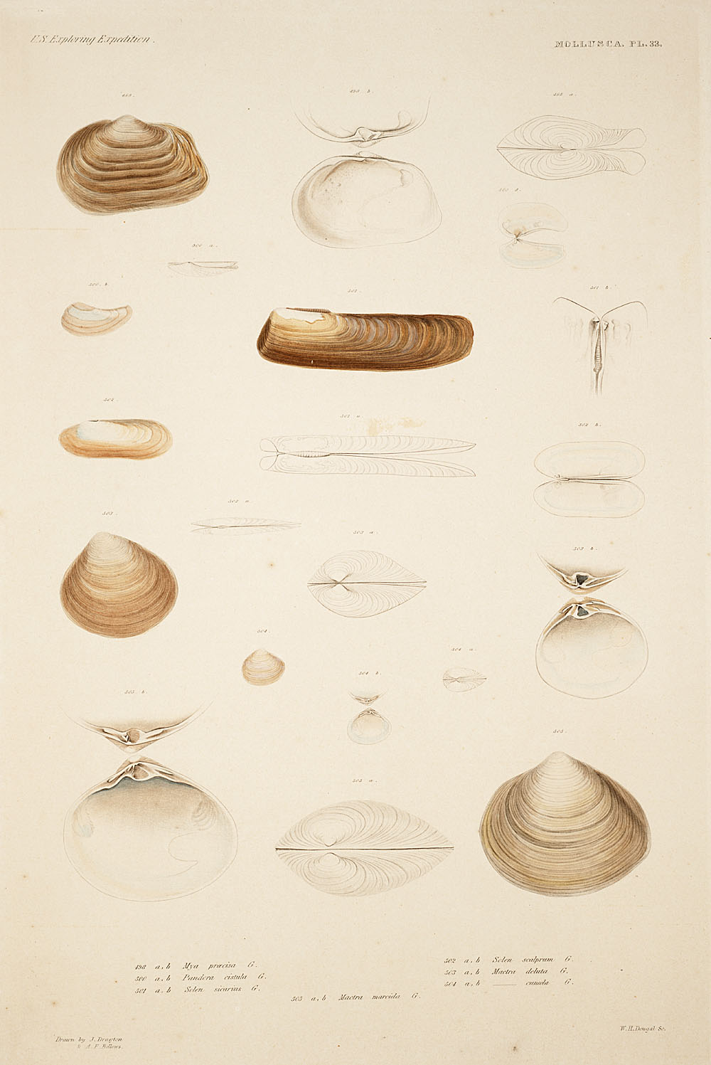 Mollusca, Pl. 33,  Image number:sil19-18-087b