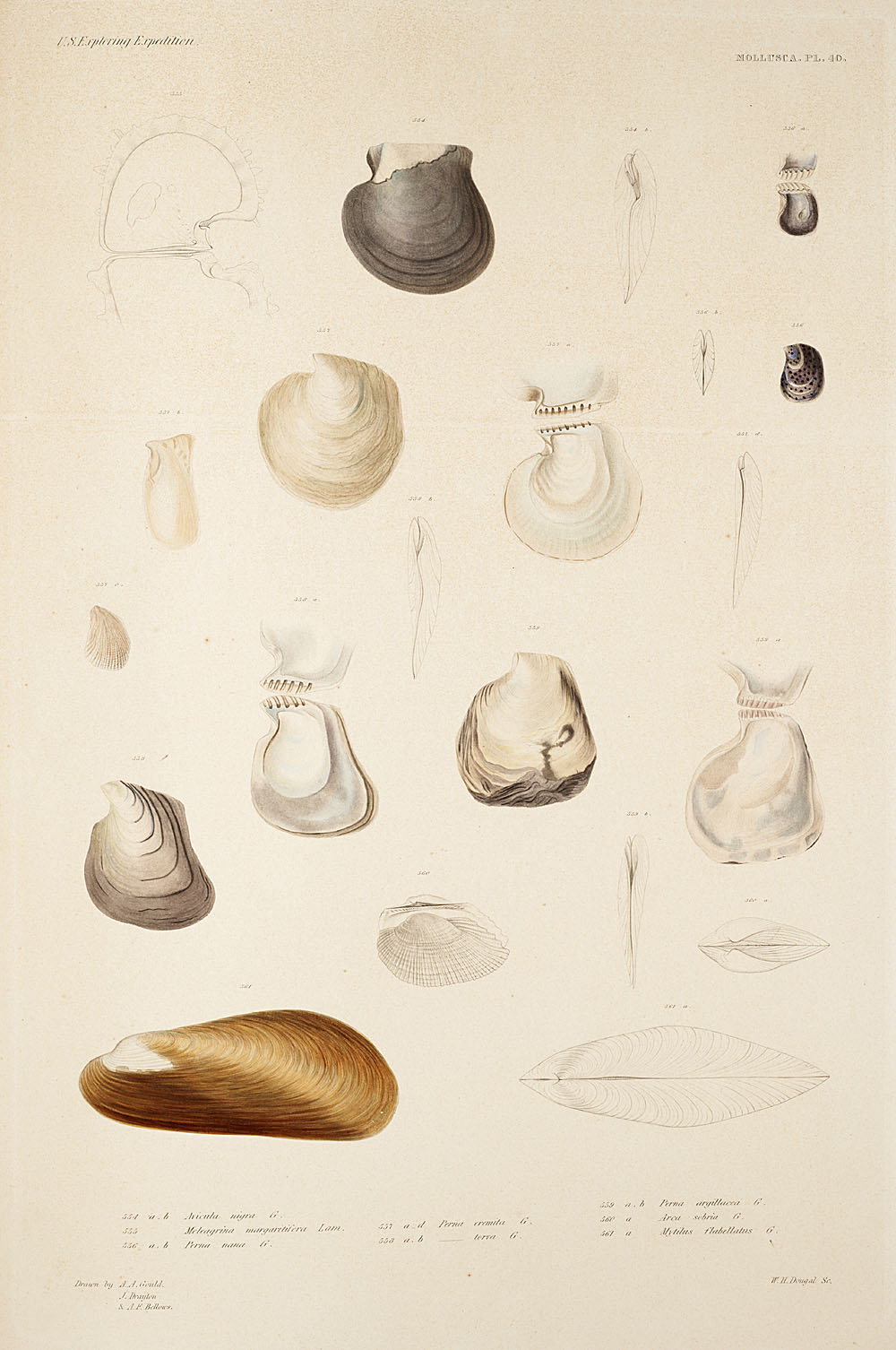 Mollusca, Pl. 40,  Image number:sil19-18-101b