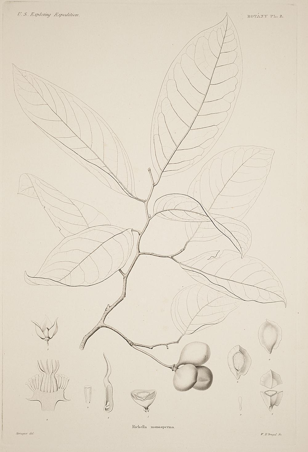 Botany, Pl. 2,  Image number:sil19-23-015b