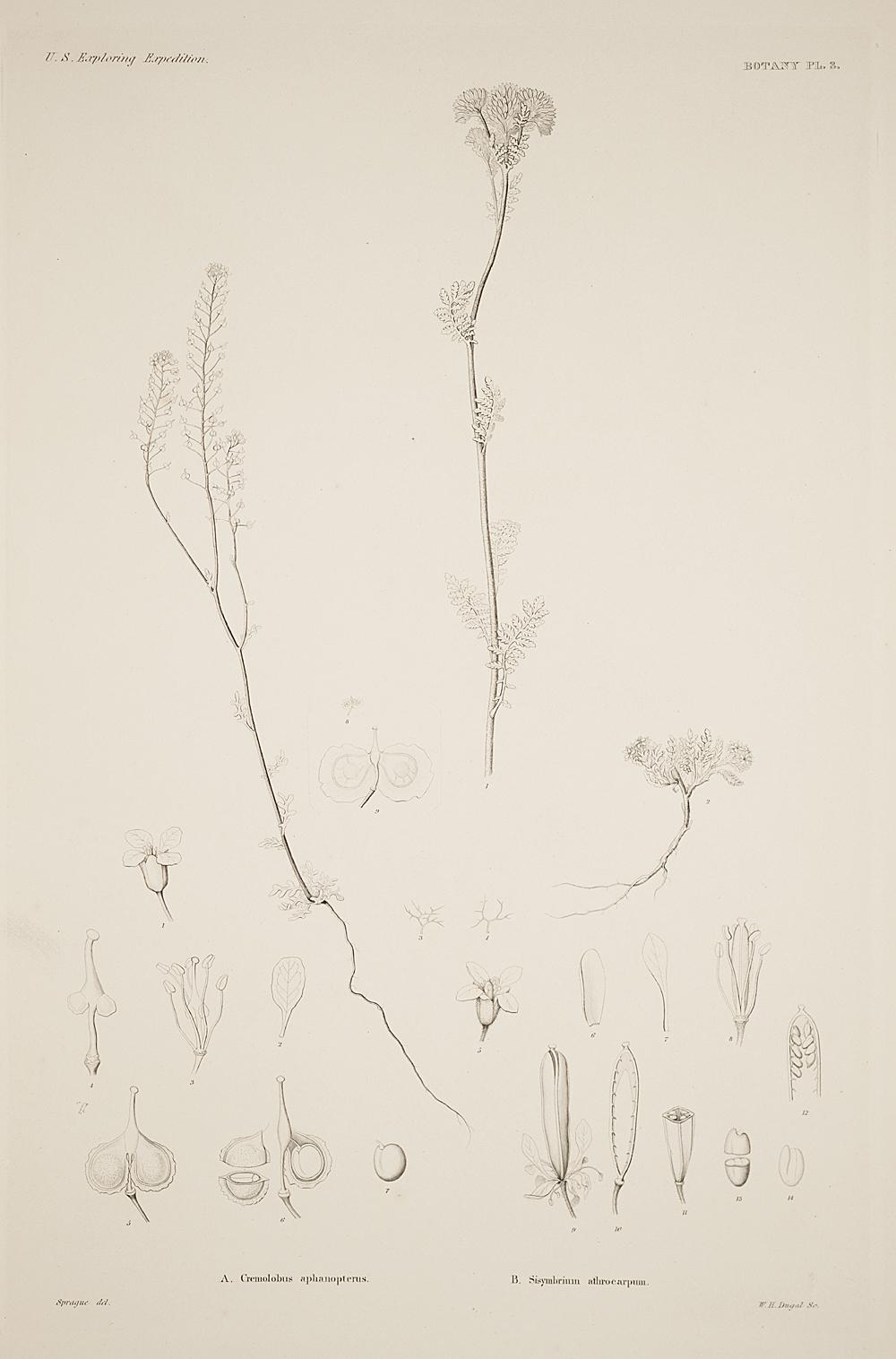 Botany, Pl. 3,  Image number:sil19-23-017b