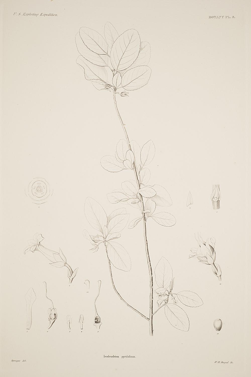 Botany, Pl. 8,  Image number:sil19-23-027b