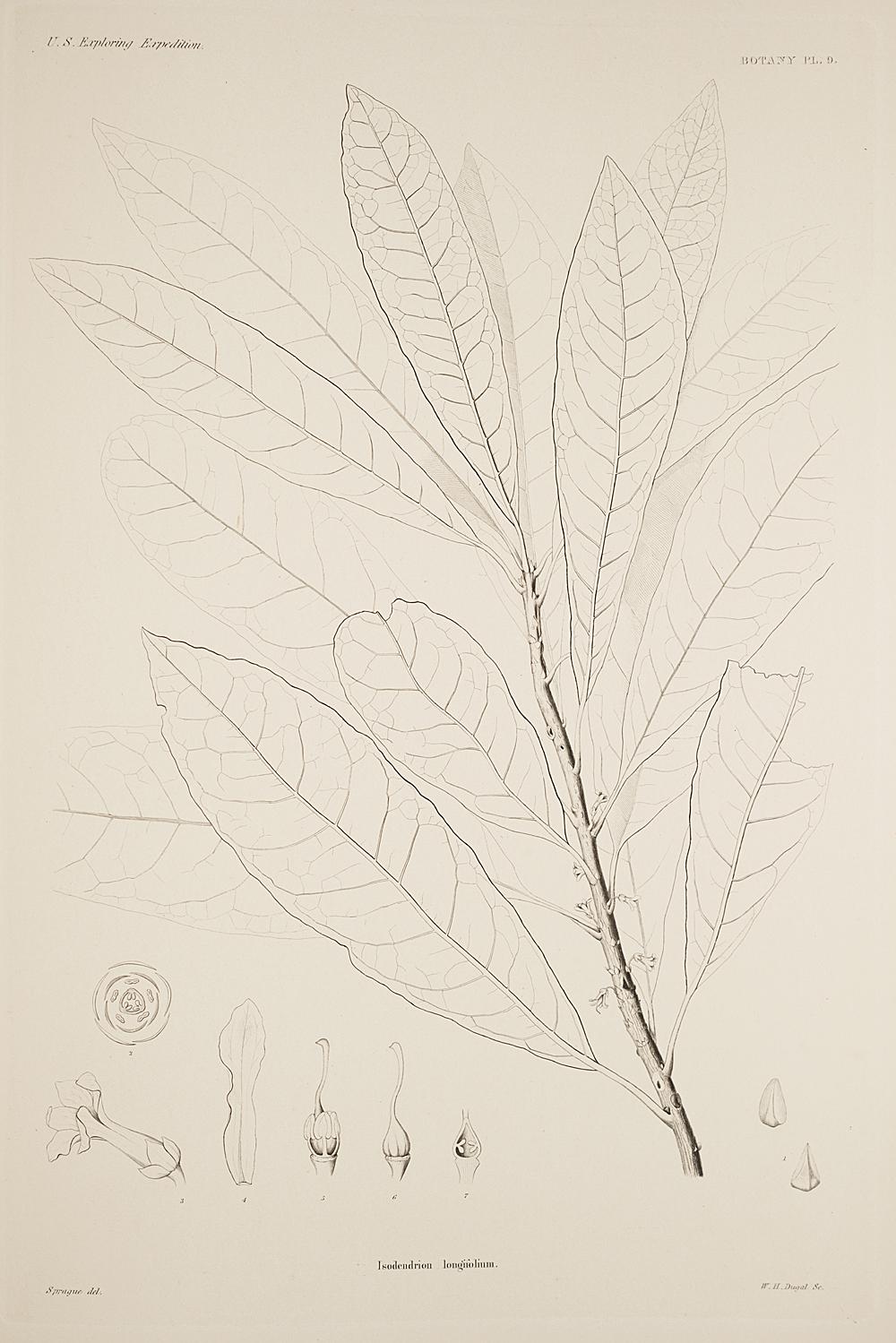 Botany, Pl. 9,  Image number:sil19-23-029b