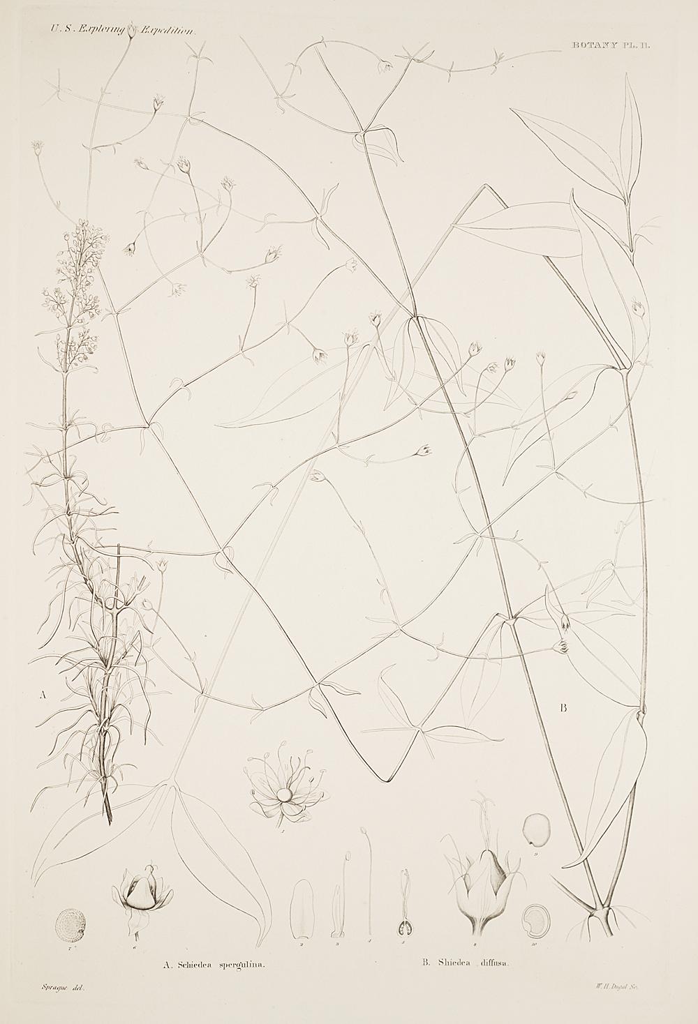 Botany, Pl. 11,  Image number:sil19-23-033b