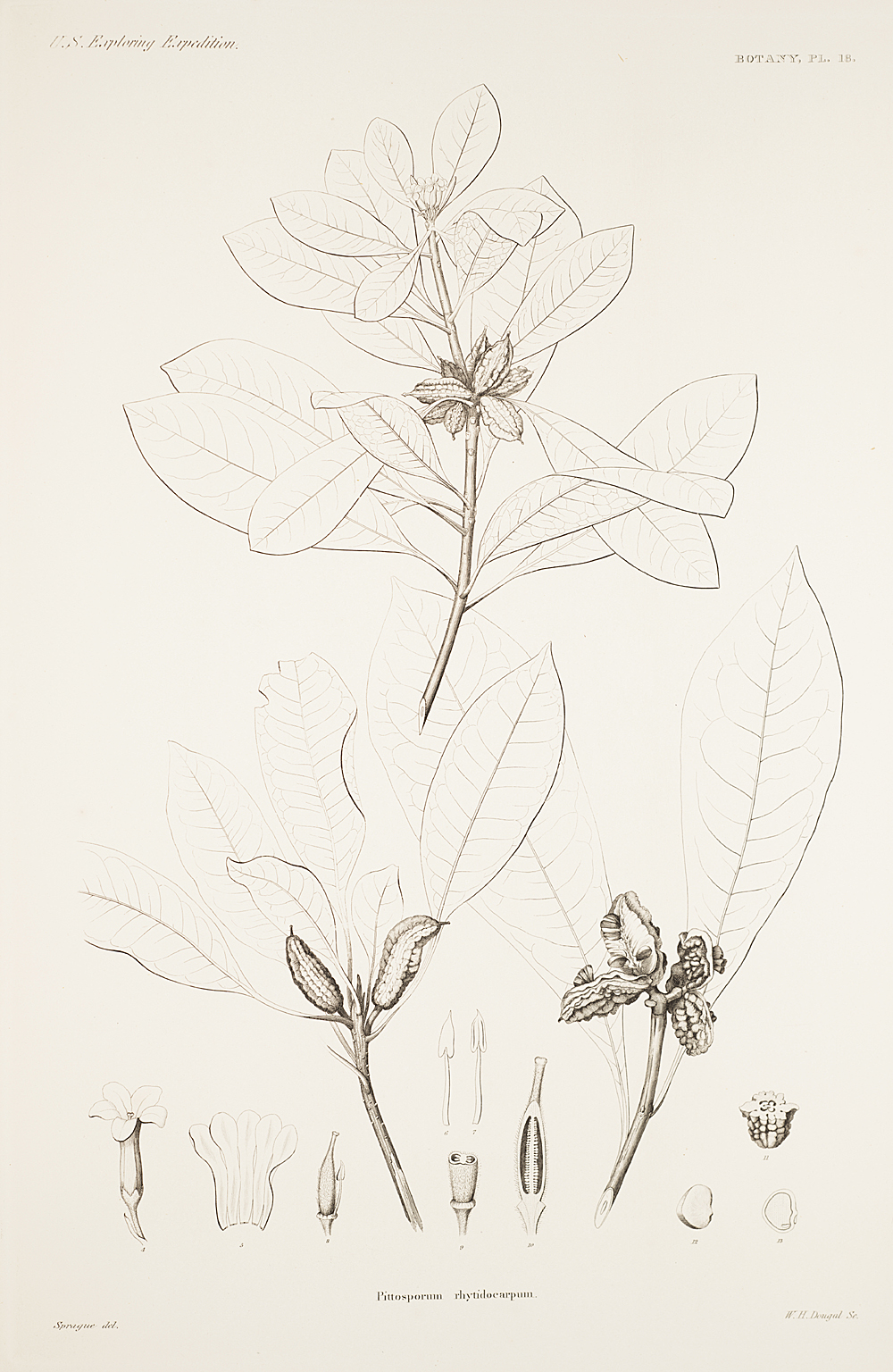 Botany, Pl. 18,  Image number:sil19-23-047b