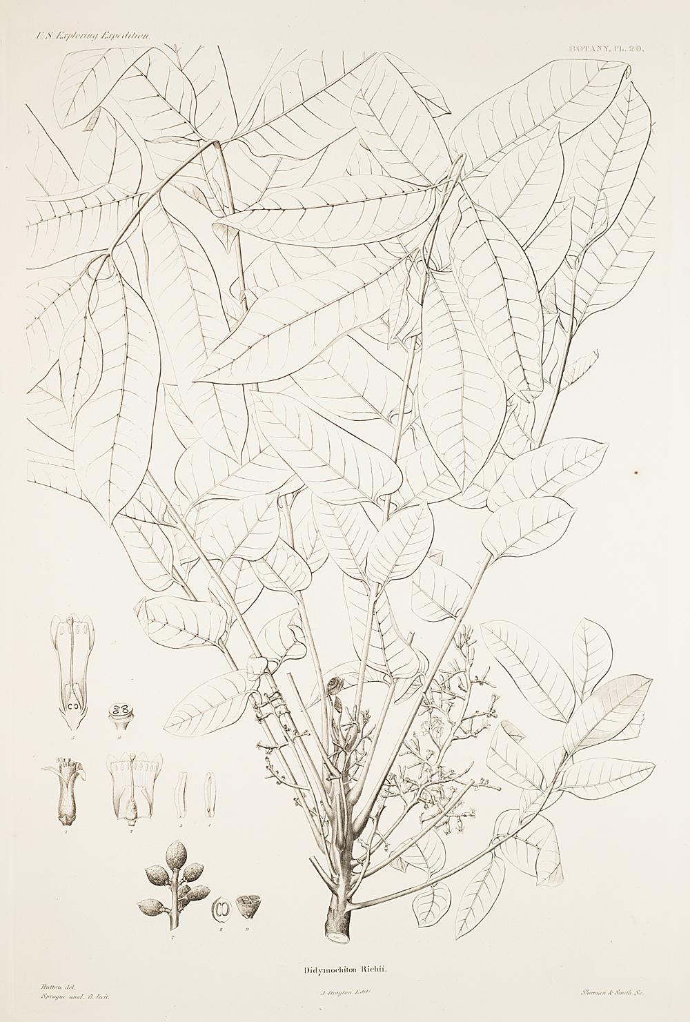 Botany, Pl. 20,  Image number:sil19-23-051b