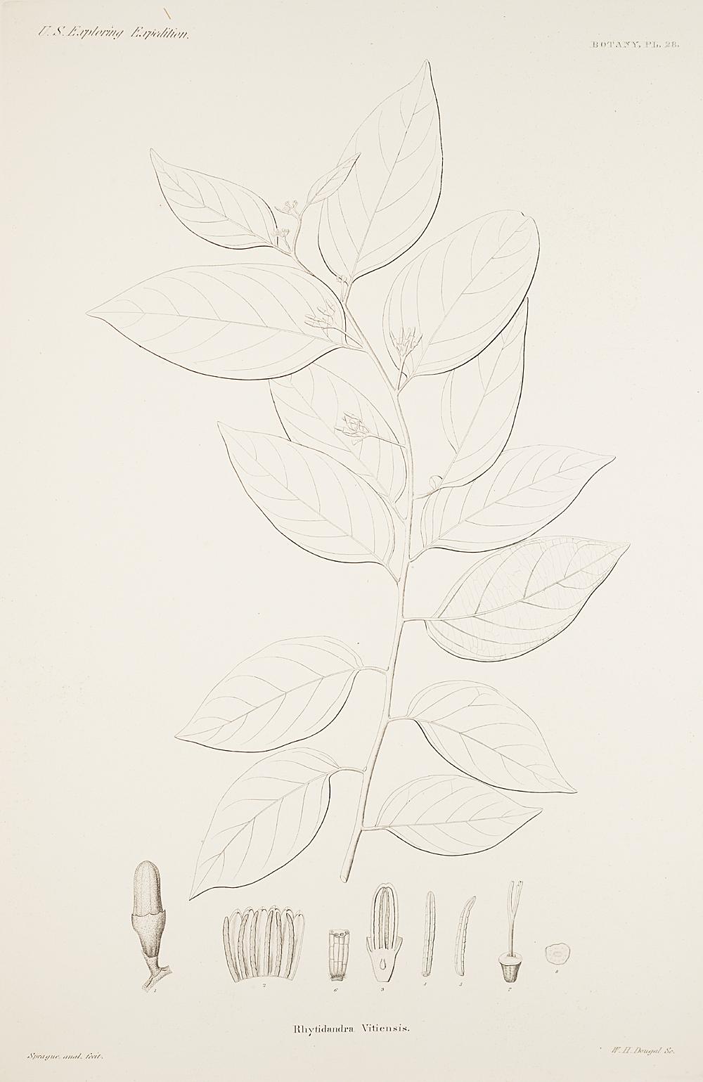 Botany, Pl. 28,  Image number:sil19-23-067b